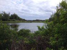 Spittal Pond Nature Reserve