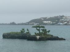Redshank island